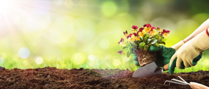 create a small garden